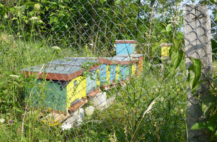 Premo From London Romanian Bees Hives 3