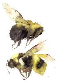 Kate Osborne watercolour bees